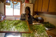 Preparing herbs for drying