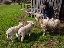 Checking on the new lambs
